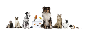 Pets_Cropped